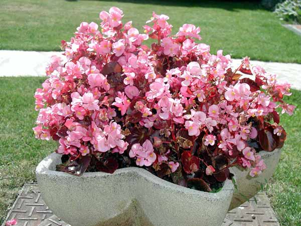 Fleursdujardin2 for Jardin l encyclopedie